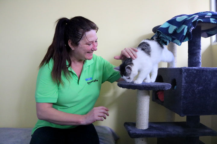 Cattery Volunteering