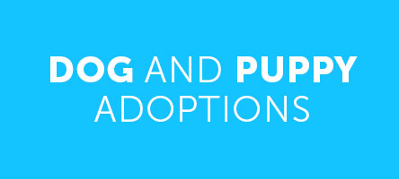 Dog and Puppy adoptions