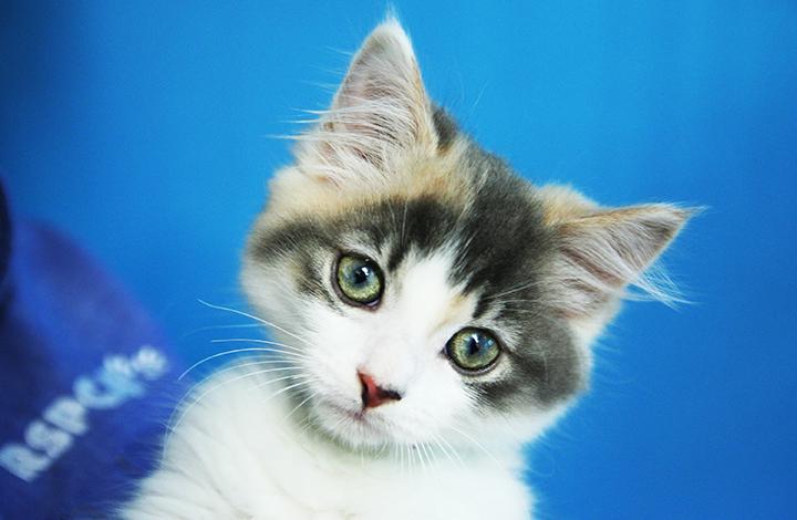 Adopt a Pet   RSPCA ACT