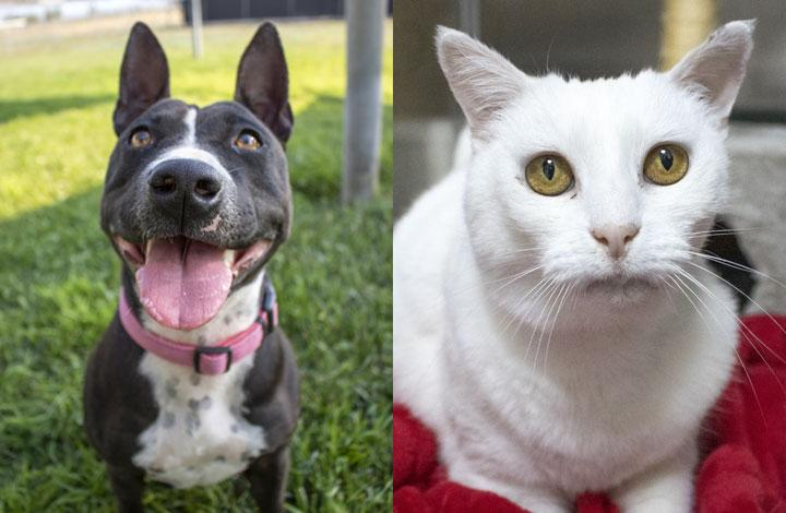 Daisy is a black and white dog and Peaches is a white cat