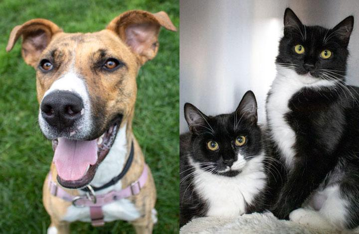 Roger is a smiley brown and white dog and Cagney and Lacey are black and white kittens