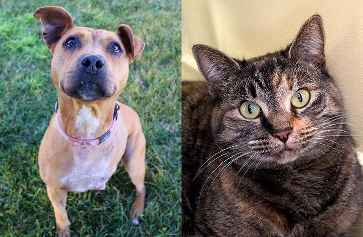 Tazz is a brown 3 legged dog and Phoenix is a tortoiseshell cat