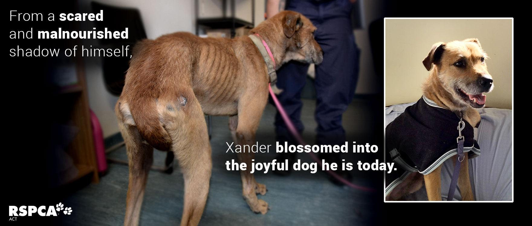 Xander and 5 other dogs were in need of immediate help