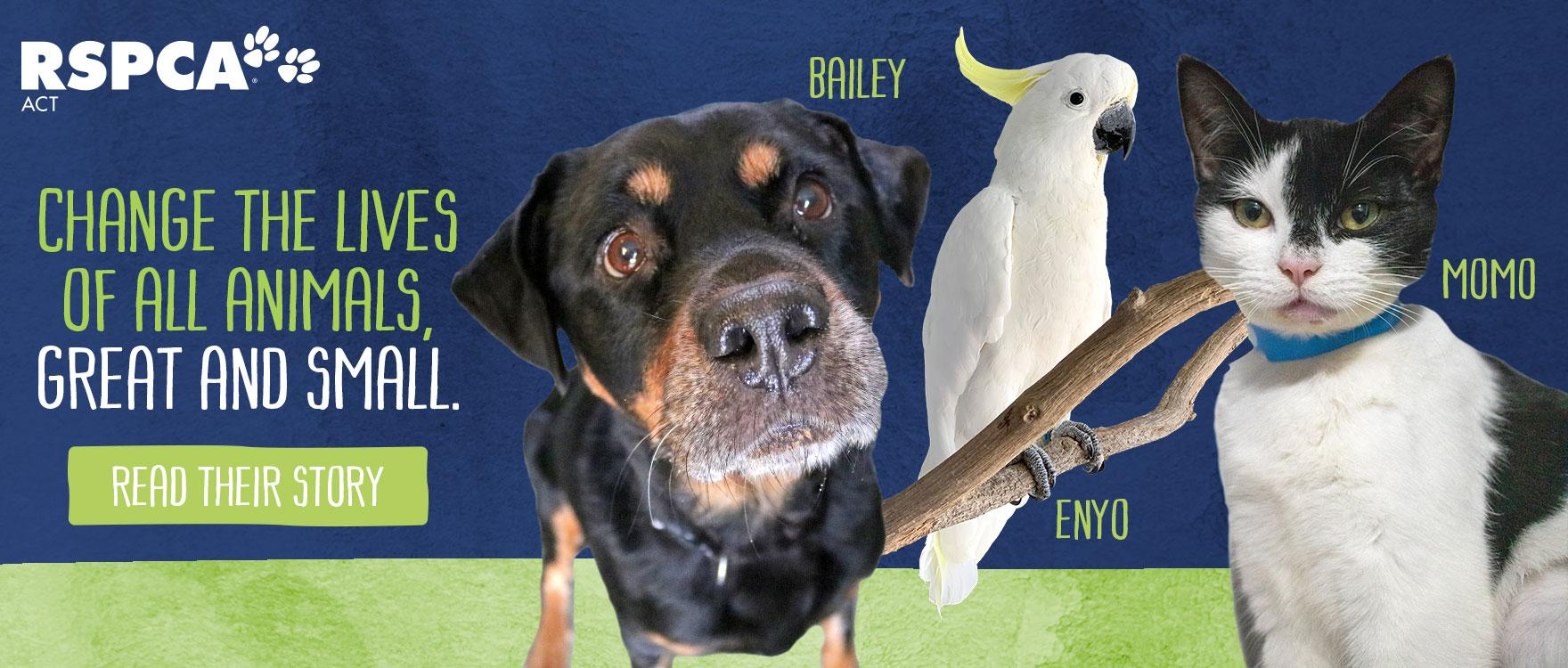 Bailey, Momo and Enyo needed help, will you be there for others just like them?