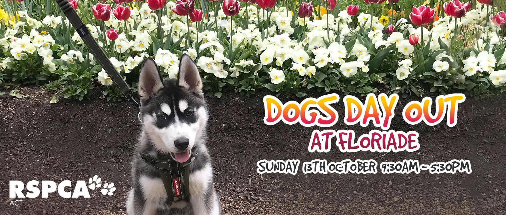 Dogs Day Out at Floriade