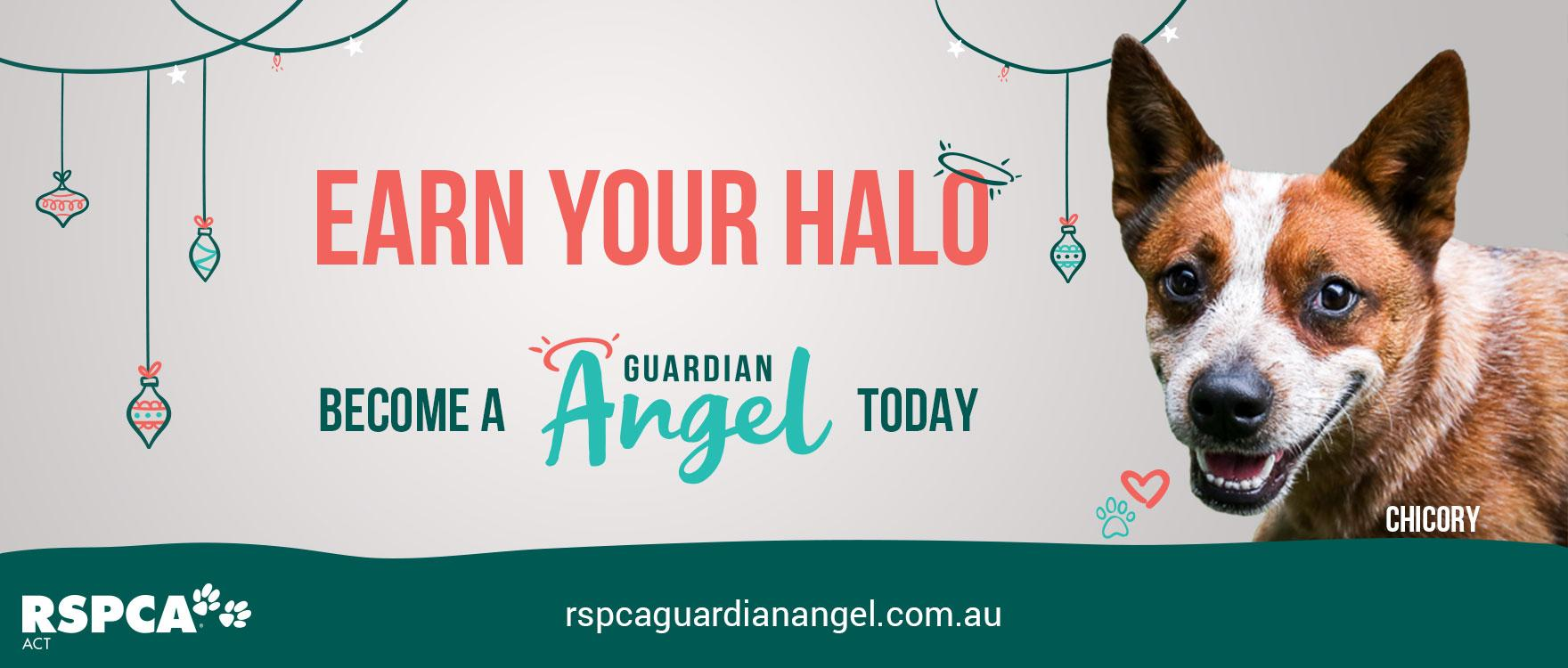 Earn your halo by becoming a Guardian Angel for an animal in our care