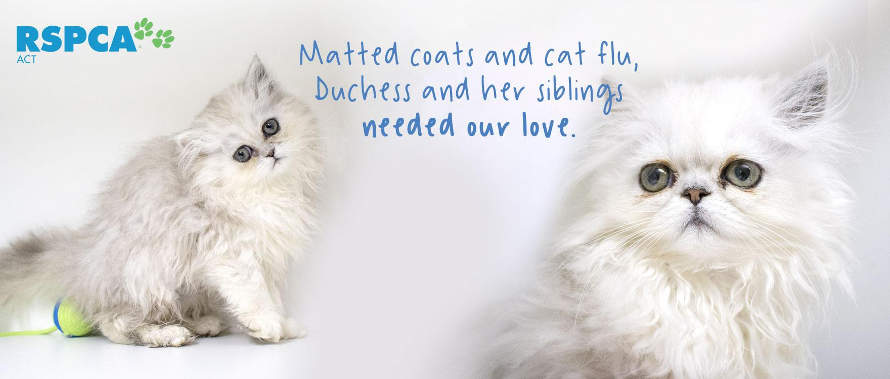 Matted coats and cat flu, Duchess and her siblings needed our love.