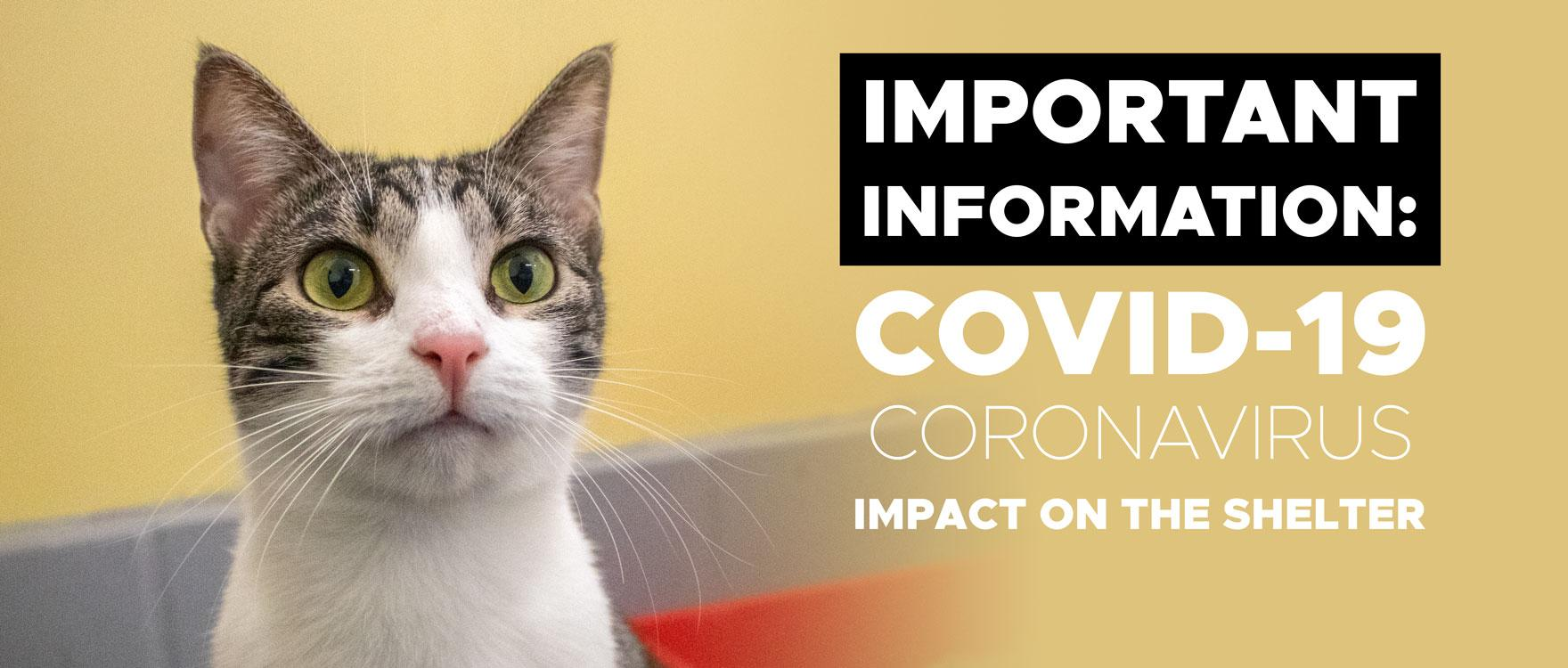 COVID-19 Impact on RSPCA ACT